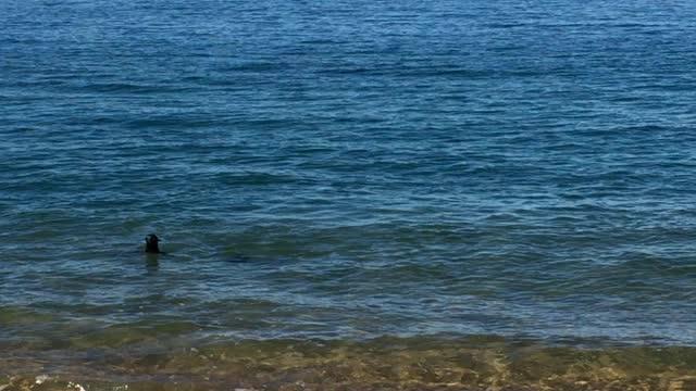 Spielende Fellrobben beim Abel Tasman Track