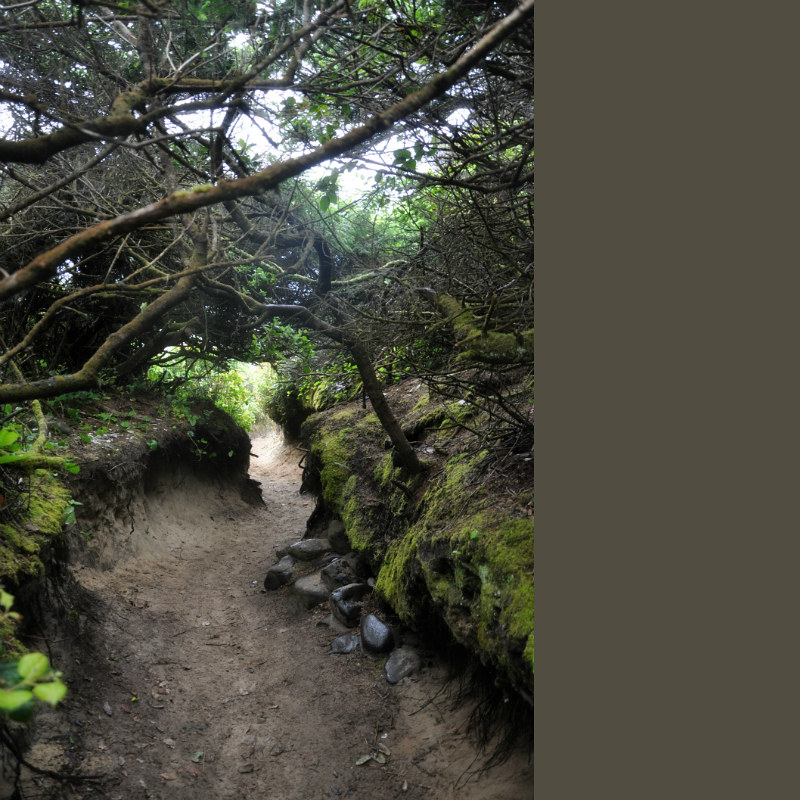 Hobbit Trail @ Mt. Hope Chronicles