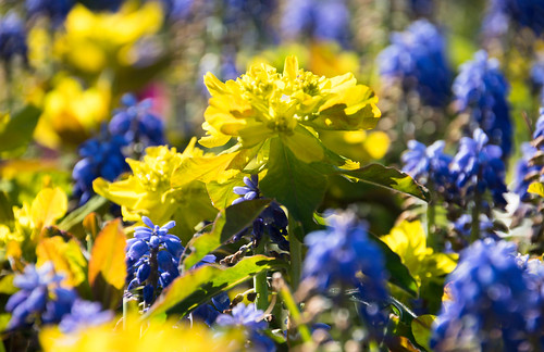 Yellow and blue | by Maria Eklind