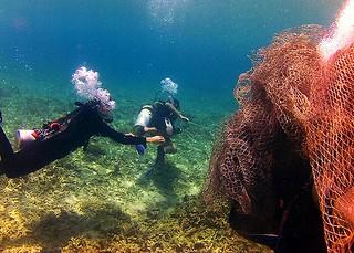 """<img src=""""padi-fun-diving-operation-turtle-rescue-tioman-island-malaysia.jpg"""" alt=""""PADI fun diving, Operation Turtle Rescue, Tioman Island, Malaysia"""" />"""