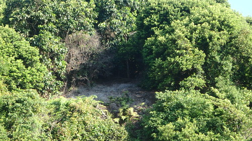 Landslide at coastal forest on Pulau Jong