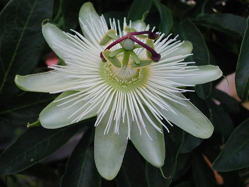 ces quelques fleurs de nos jardins 34252653293_87de9b6e35