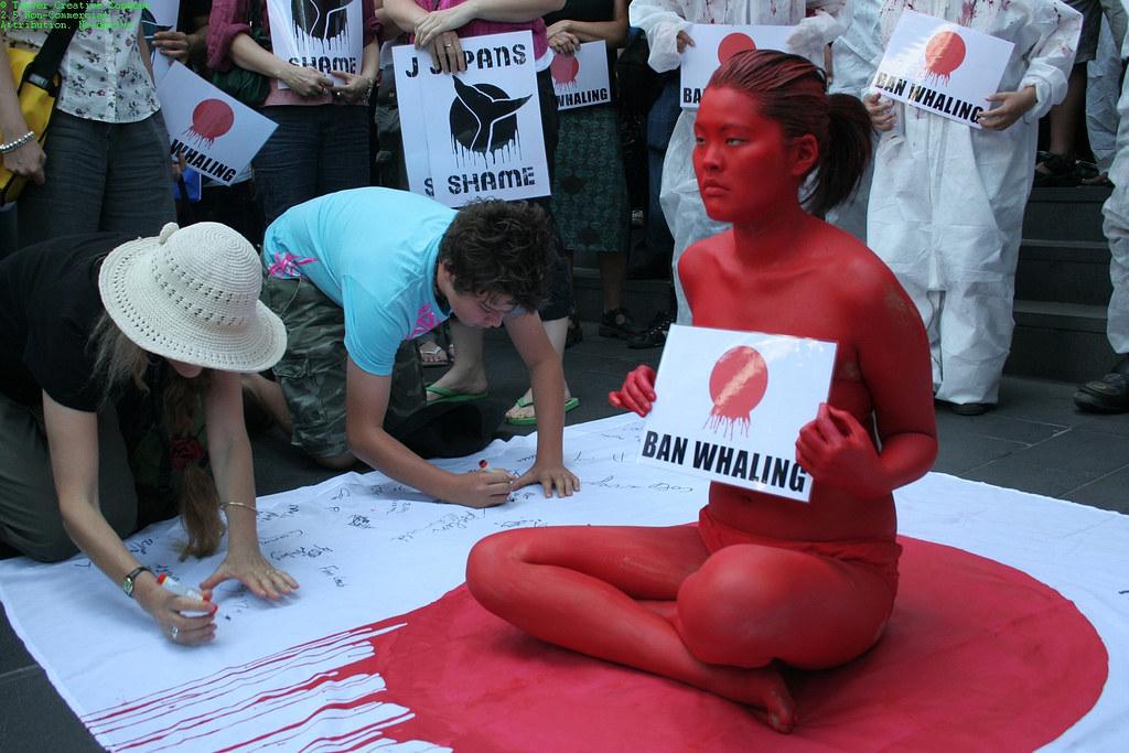 反捕鯨運動。