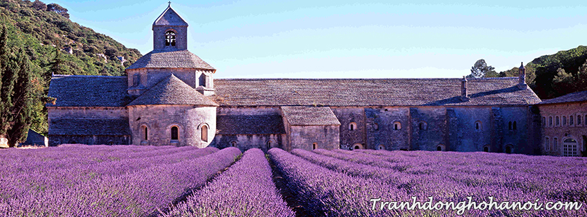 Hinh anh canh dong hoa lavender lam hinh anh bia facebook