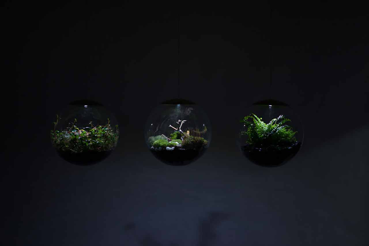Create Your Own Mini-Garden With These Terrarium Lamps: An 8-inch LED version of Globe is available for $380, whereas a 12-inch LED version is available for $460 on the project's online store.