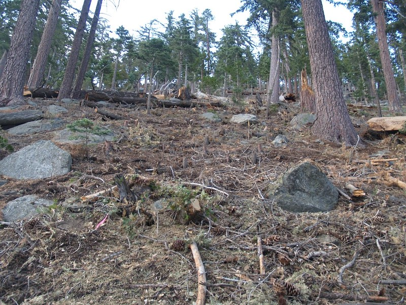 Thinning the forest - it is obvious that most of the small to mid-sized trees were logged