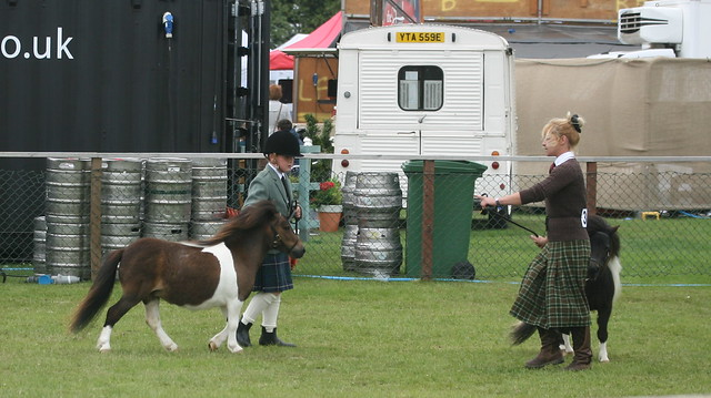 Miniature Shetlands