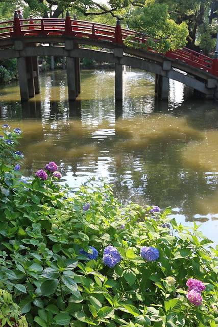 紫陽花と橋