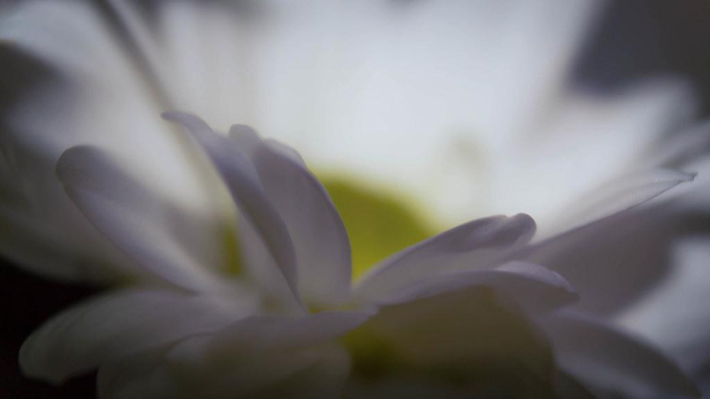 Fleur Blanche Geoffrey Thaurin Flickr