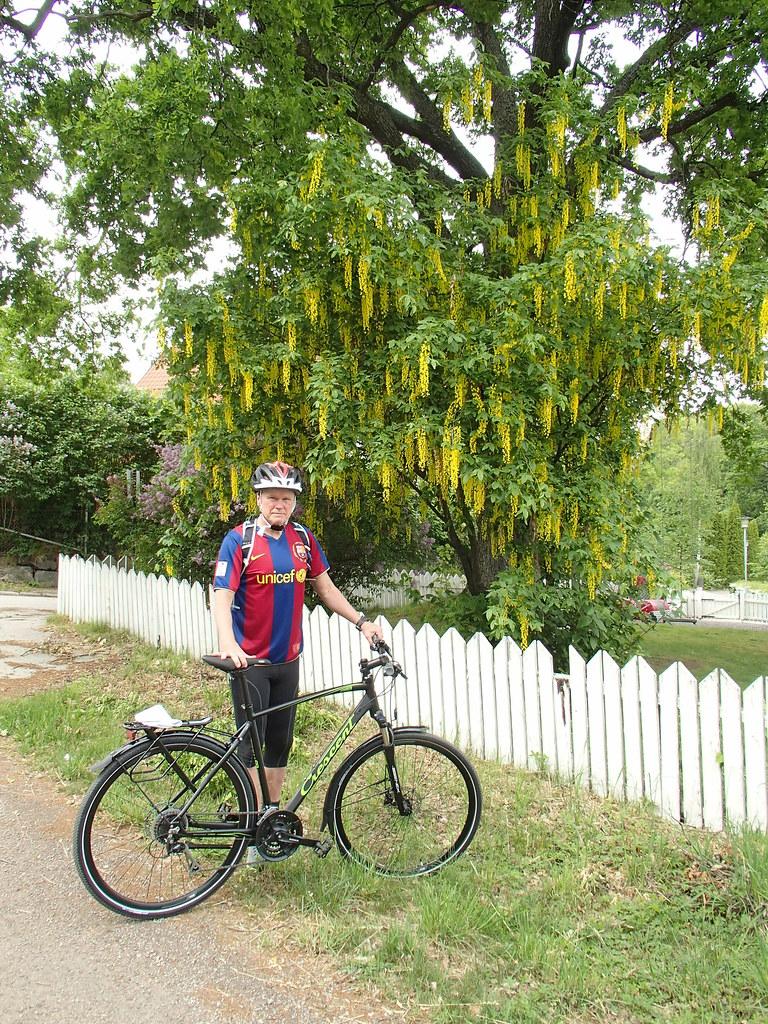 Ny cykel och vackert gullregn