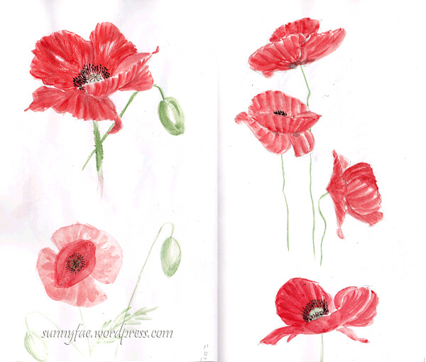 Sketching poppies 4