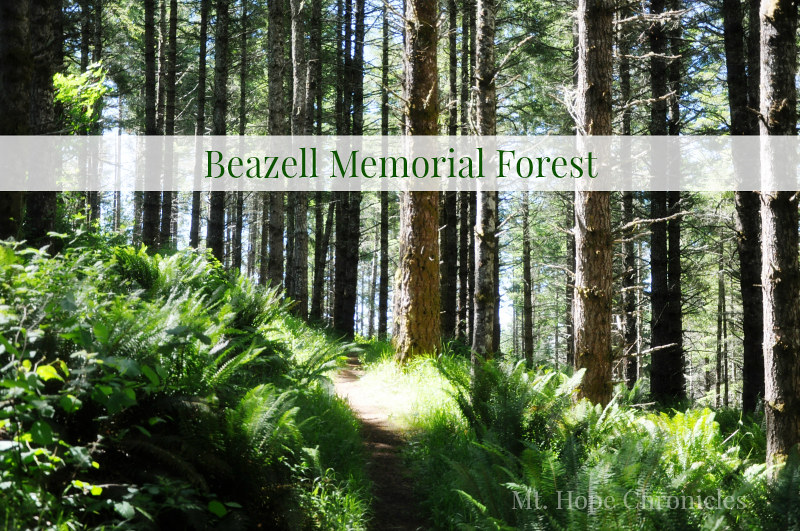 Beazell Memorial Forest @ Mt. Hope Chronicles