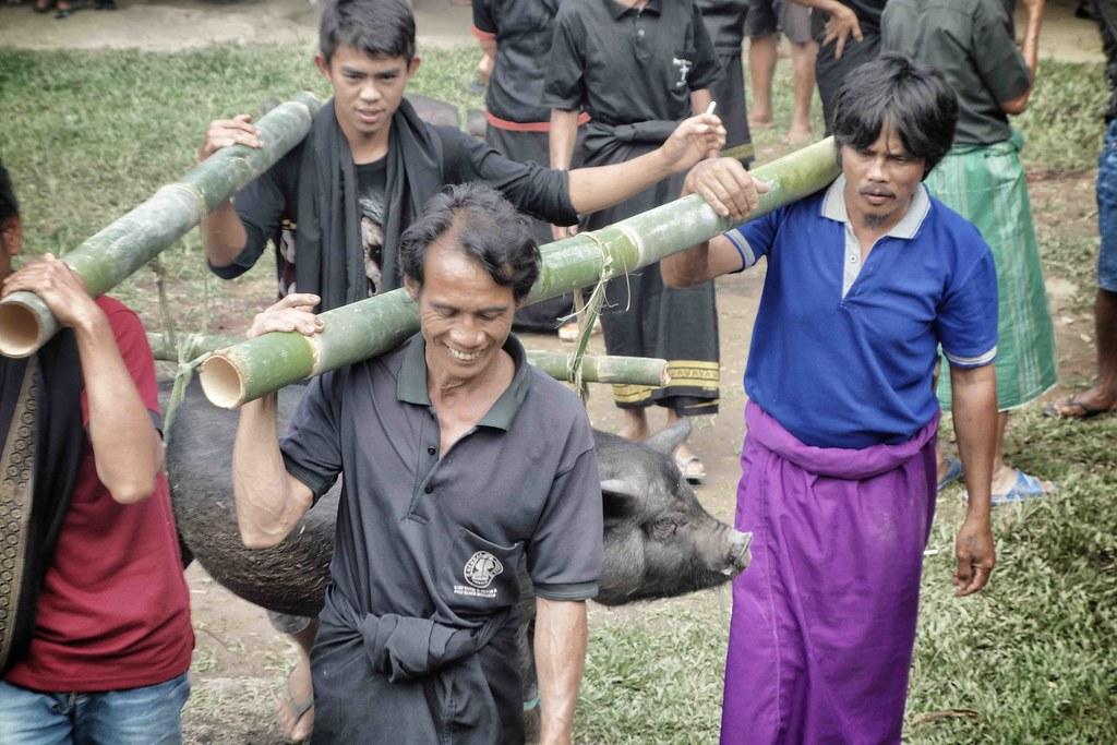Rantepao - Ceremonie - Offrande Cochon
