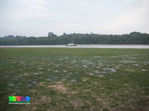 Seagrass meadows at Pulau Sekudu