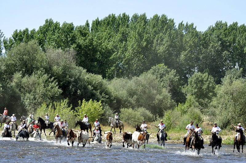 Normas que regirán el protocolo general de seguridad del tradicional traslado de bueyes a caballo dentro de las Fiestas de San Juan