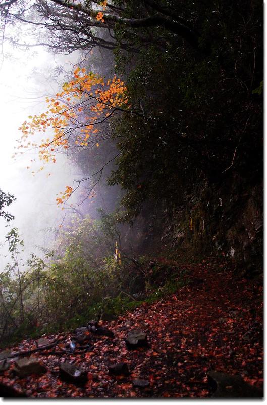 霞喀羅楓紅 12