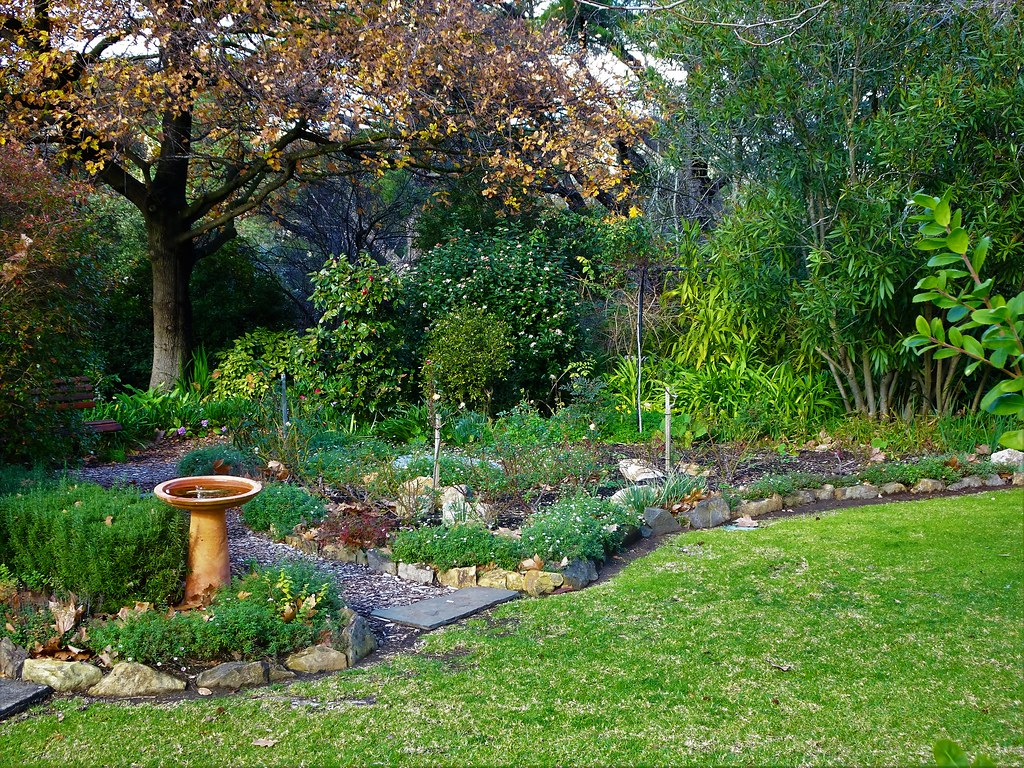 Exceptionnel Bird Bath And Garden Beds Beneath A Giant English Oak Tree In The Gamble