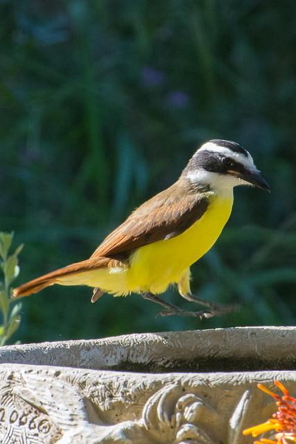 Birds Home-101