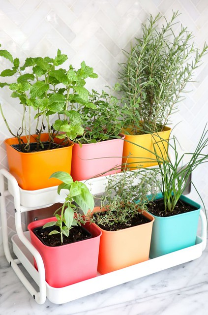 02-Make-a-Colorful-Indoor-Herb-Garden