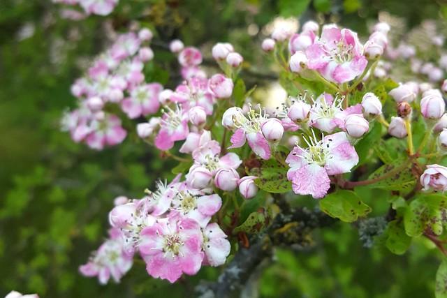 June 2017 Blossom