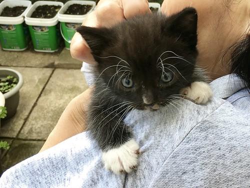 Kitten !