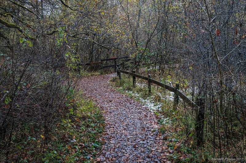 Pasarela al observatorio de aves y anfibios del Bosque de Orgi