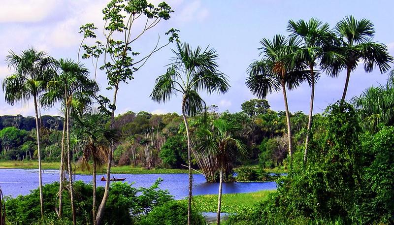 Instituto lança edital para apoiar projetos de conservação e biodiversidade, Biodiversidade em Juruti