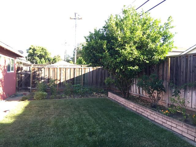 Backyard today