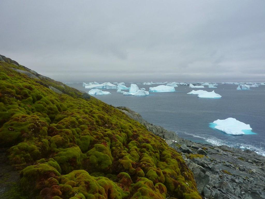 南極群島的苔癬。圖片來源:Matt Amesbury。