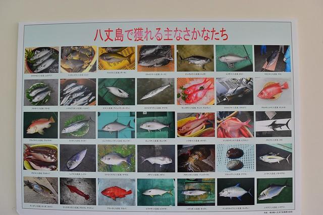 八丈島で獲れる魚
