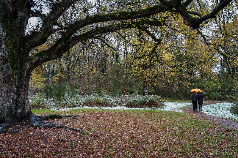 Paseando junto a robles centenarios en el Bosque de Orgi