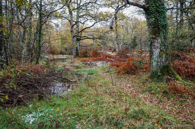 En la zona húmeda del Bosque de Orgi