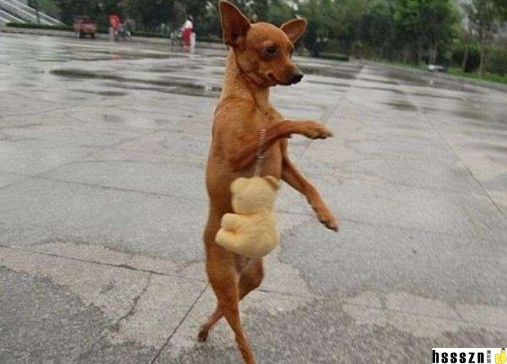 dogs-walking-on-two-legs-2-728_727_522