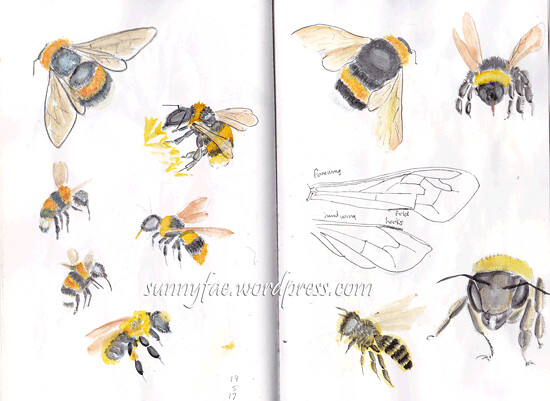 bumble bee sketches 3