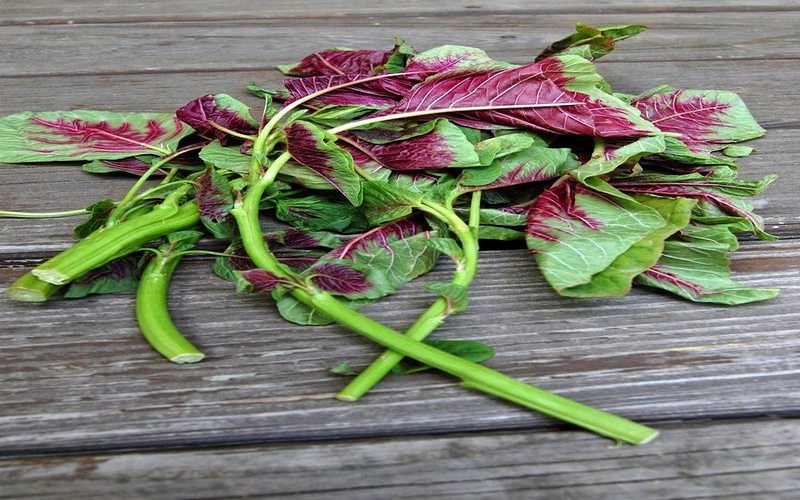 Top 10 Health Benefits Of Eating Amaranth Leaves