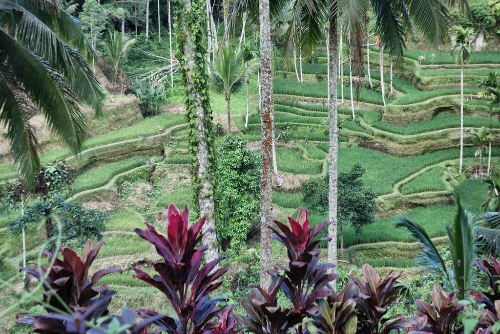 Bali - Ubud - Tegallalang 5