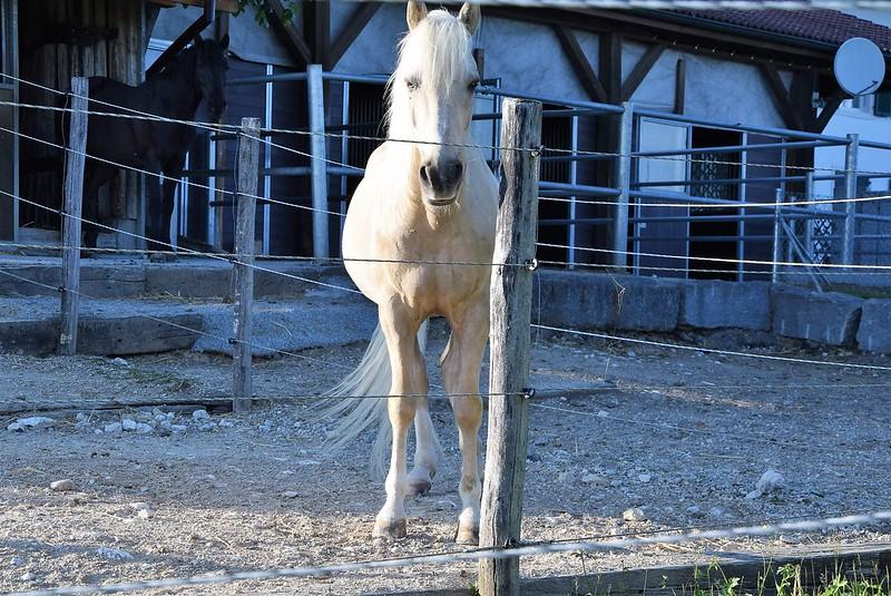 Horses 21.05 (2)