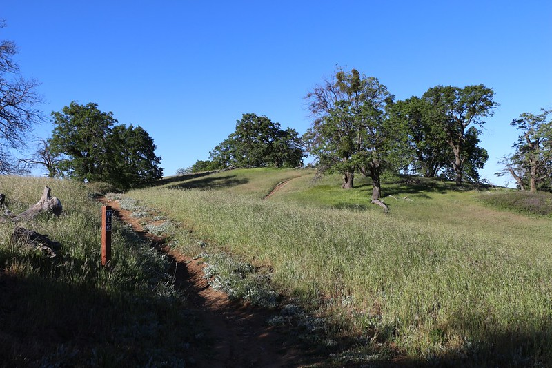 High grassy rolling hills on the Volcan Mountain Trail
