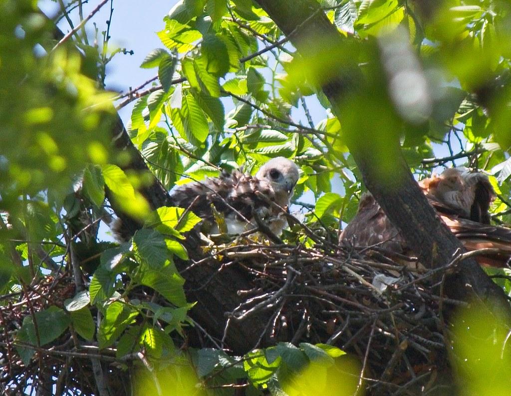 Tompkins Square nestling