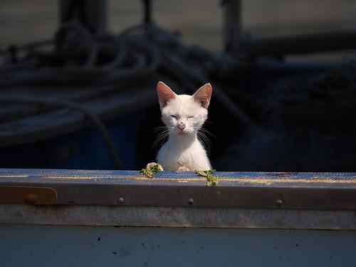 女木島 猫
