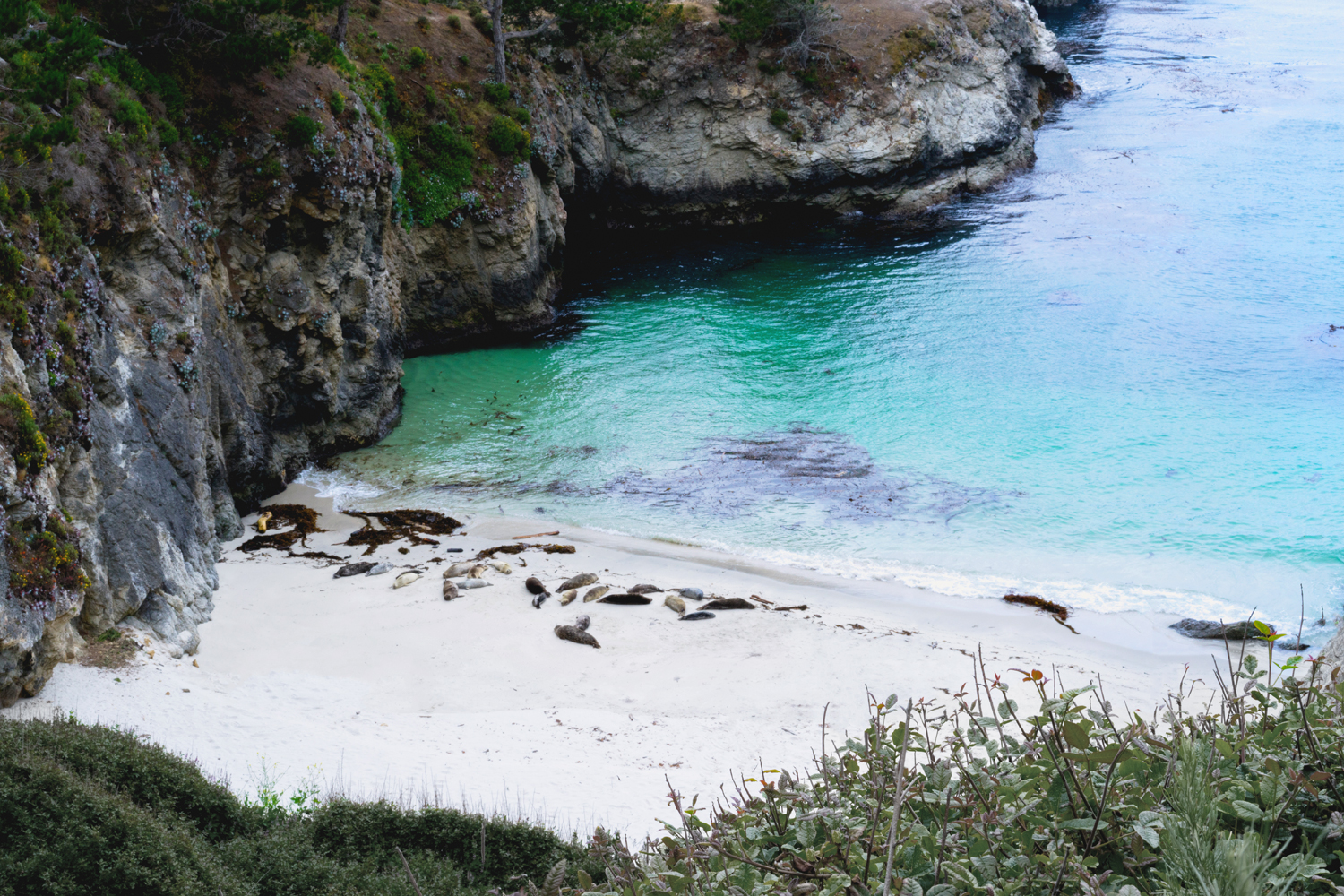 12pointlobos-chinabeach-seals-wanderlust-travel