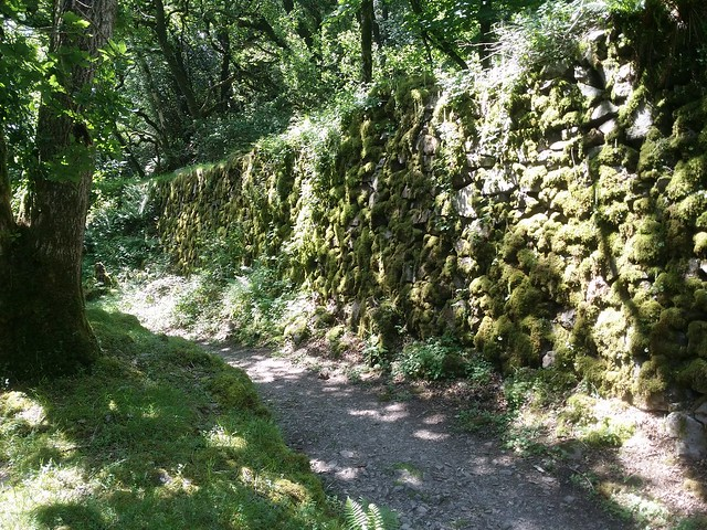 Beside the old mine track retaining wall