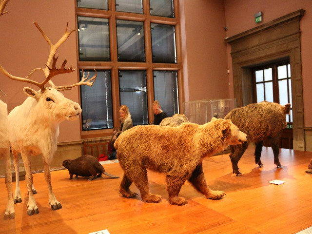 kelvingrove museum obiective turistice glasgow 7