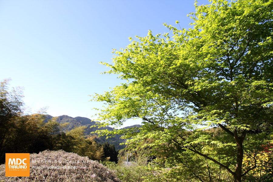 Kawachi Fuji_15