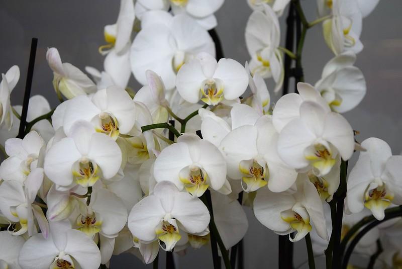 Orchids 24.05 (1)
