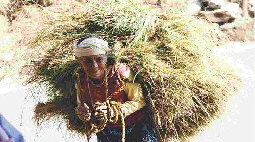 जंगल से चारा लाती बुजुर्ग महिला