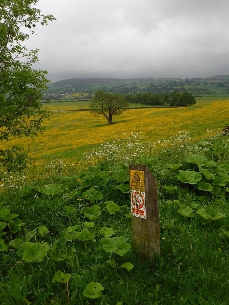 Salterforth to Foulridge 6