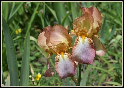 ces quelques fleurs de nos jardins 34995878996_a99aa891f4