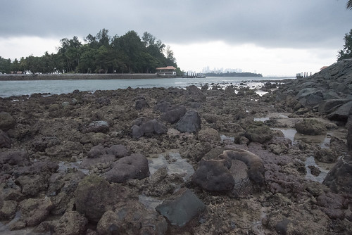 Living reefs of Big Sisters Island