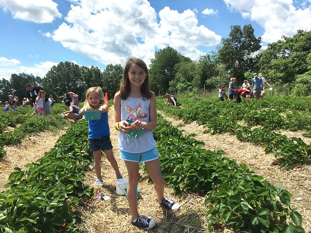 Strawberry picking, animals and playground